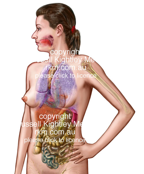Anatomical And Medical Illustration Female Anatomical Figure By