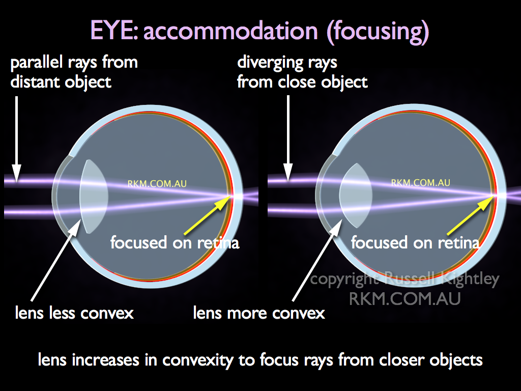 eye accommodation - Gecce.tackletarts.co
