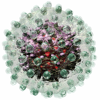 Hepatitis B Virus animation