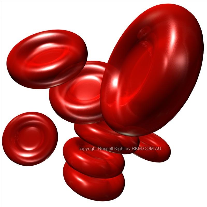 Red Blood Cells Rbc Or Erythrocytes