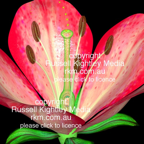 flower structure by russell kightley media, Beautiful flower