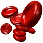 red blood cells or erythrocytes image