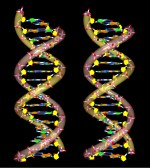 DNA 3D; stereo pair