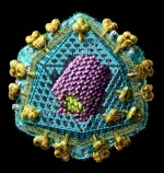 HIV virus structure picture